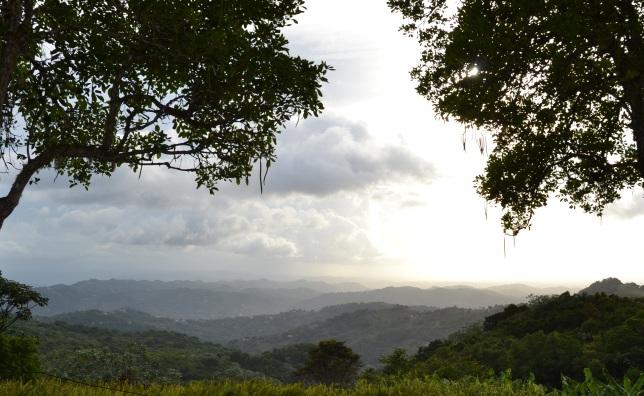 Day dies in Puerto Rico PR 186(cropped)