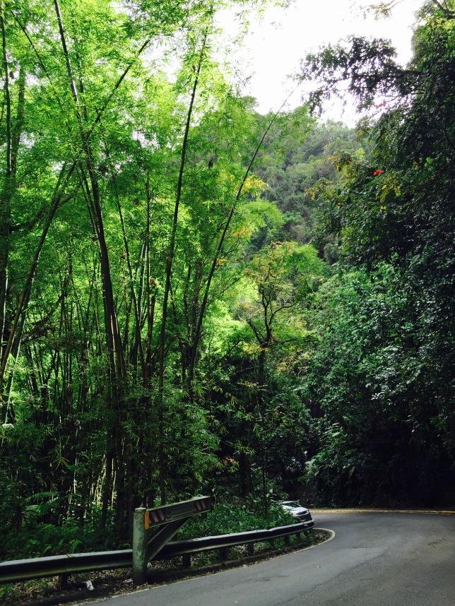 PR 191 just south of Coca Falls