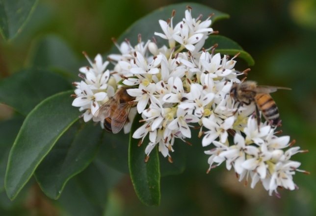 Bee in flower 2 cropped