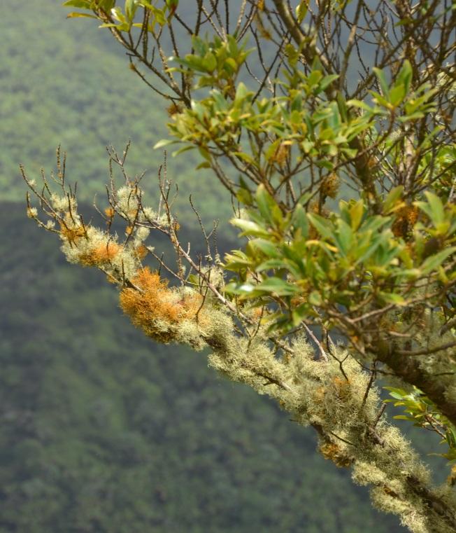 Bush blossom cropped