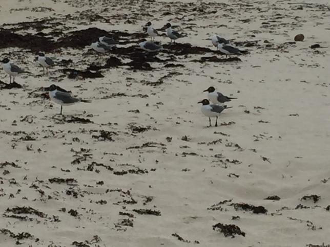 Bird puzzle, Flamenco Beach
