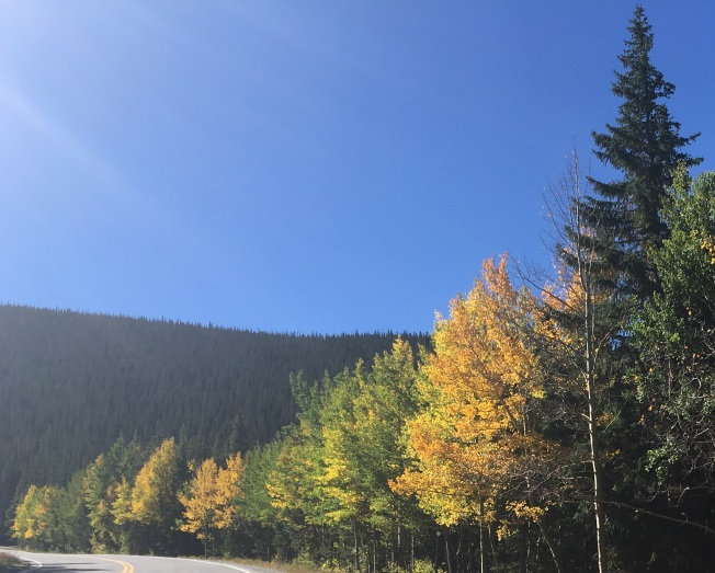 Aspens and pines and highway